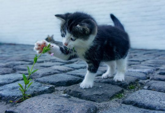Cat Flower Kitten Stone Pet Animals Explore